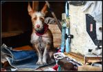 The dog seller of old things by kanes