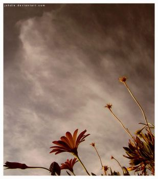 Waiting for rain.. by Johdie