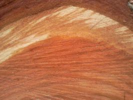 Wood Texture 14 by Fea-Fanuilos-Stock