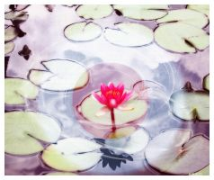 Glow of Lotus by aisucafe