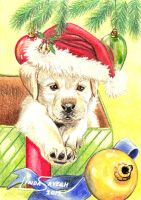Merry Christmas Puppy... by Artsy50