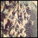 bee farm by perfectired