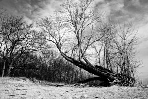 Fallen Tree 49442 by ObscuraStudio