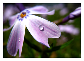 Raindrops 2 by MichelleMarie