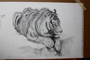 Bengal Tiger by calie4ever28