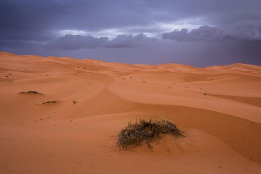 Rain and sand by Francy-93