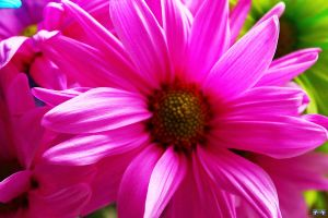 Pretty In Pink by LifeThroughALens84