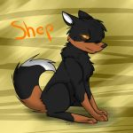 Shep request by wolvesforever122