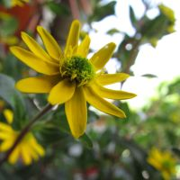 Photography: Yellow beauty by Starlightee
