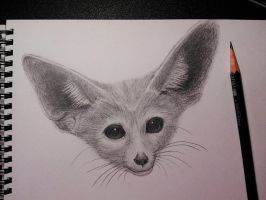 fennec fox by Eason41