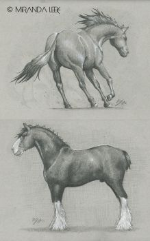 Horse Studies by RedCoaster
