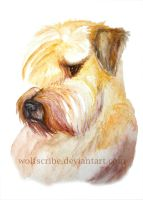 Soft-coated Wheaten Terrier watercolor by WolfScribe