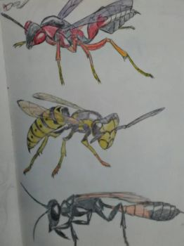 Wasp study by Spinian
