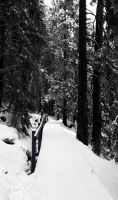 Into The Black Forest by Caillean-Photography