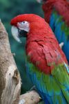 Macaw 007 by MonsterBrand-stock
