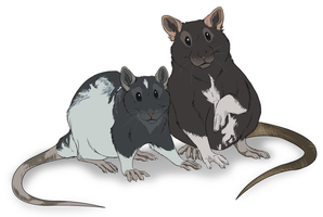 rats by DawnFrost