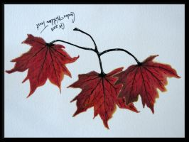 Autumn Leaves - Watercolor by dove-51