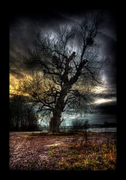 An old Tree by penner2000