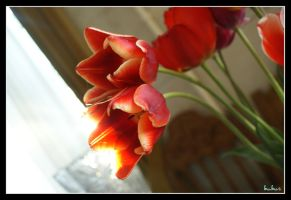 Light in the tulips by mms92