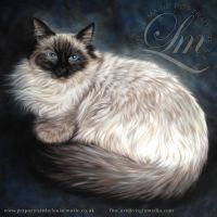 Ragdoll Cat Pastel Portrait of Mercury by LouiseMarieFineArt