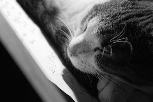 Cat 3. by floodlee