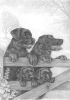 Labrador Retrievers by lynniel