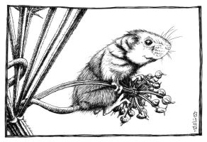 Harvest Mouse by CreativeSoup