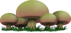 BIC Mushrooms by SparticusX