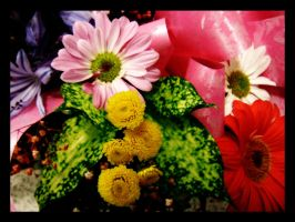 Flowers with dark tones by blizzy123
