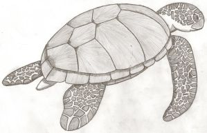Turtle Sketch -EDIT- by Psybreon