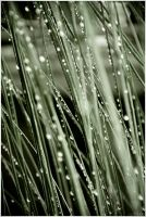 rhythm of the falling rain -I by cindeo