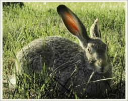 Rabbit ARE lucky by blackbelly