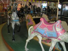 Boardwalk Carousel by steward
