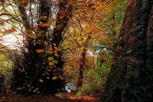 Belvoir Forest Path, Autumn 3 by Gerard1972