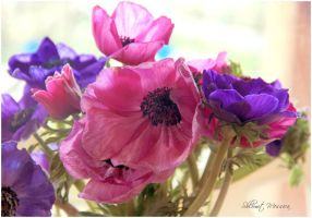 Bouquet of Anemones by ShlomitMessica