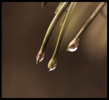 drops of reflection by FMpicturs