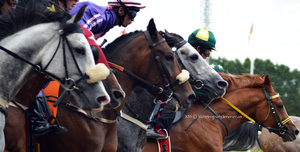 Horse Racing 7 by JullelinPhotography