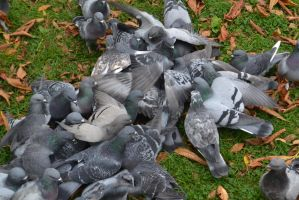 75th Anual Pigeon Hunger Games by Sytisy