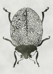 Beatle Brain by the-ramy