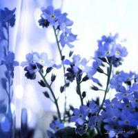 July is blue 9 by martaraff