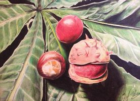Conker Plant Study by inhibitus