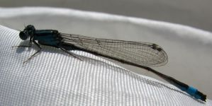 Macro photography 3 by BlueX-pl