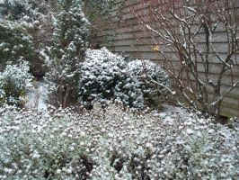 My garden coverd in snow by jolieke10