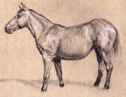 Study of a horse by oosterbe