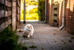 Alley cat by TLO-Photography