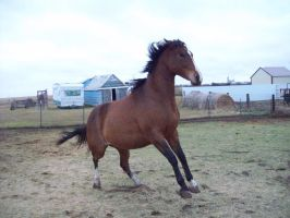Cece Being Crazy Stock Image by Amber-Loves-Horses