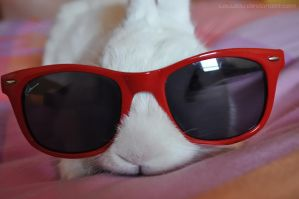 Cool Bunny by LauzLanille