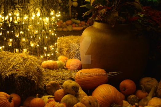 Pumpkins in light by SolaceSong