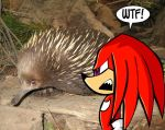 Knuckles is a what? by Pembroke