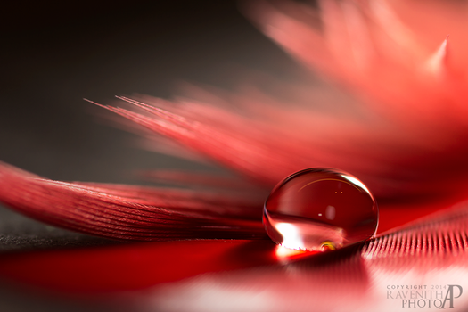 Red droplet. by Ravenith